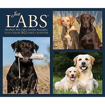 Labs 2022 Box Calendar  Dog Labrador Retrievers Daily Desktop by Willow Creek Press