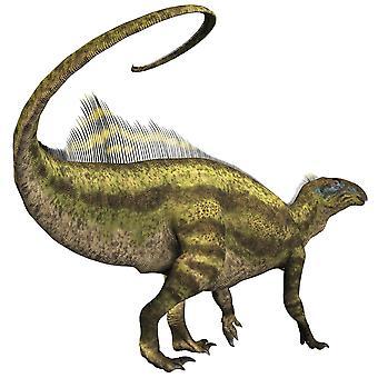Tenontosaurus oli ornithopod kasvissyöjä dinosaurus, joka asui liitukauden ajan Pohjois-Amerikan Juliste Tulosta