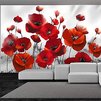 Fototapetti - Poppies in the Moonlight