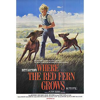 Where the Red Fern Grows Movie Poster (11 x 17)