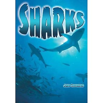 Sharks (Wow! Facts (Bl))