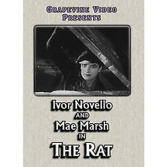 Rat 1926 [DVD] USA import