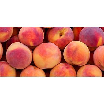 Moon Peaches -( 17.6lb Moon Peaches)