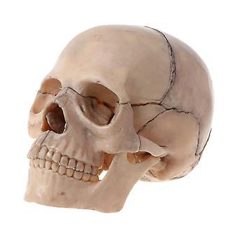 15pcs/set 4d Disassembled Color Skull Anatomical Model Detachable Medical