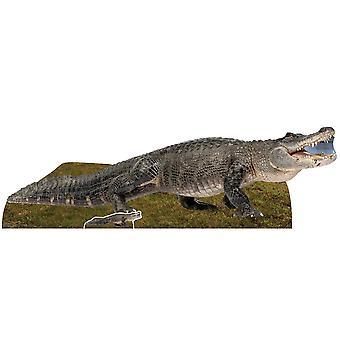 American Alligator Cardboard Cutout / Standee / Standup / Standee