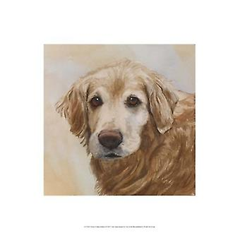 Chelsea Golden Retriever Poster Print by Edie Fagan (13 x 19)