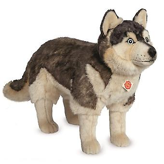 Hermann Teddy Umarmung Hund Husky stehend hoch