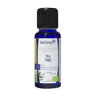 Essential oil Tea tree Bio 15 ml of essential oil
