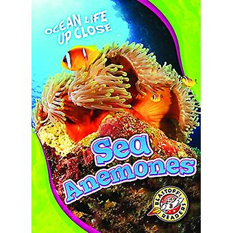 Sea Anemones by Mari C Schuh - 9781626175730 Book