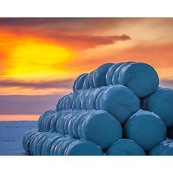 Hay bales wrapped in plastic for winter storage Iceland Poster Print