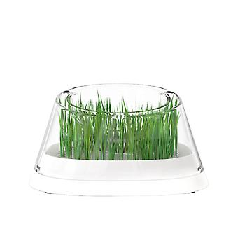 Secret Forest Cat Bowl with Cat Grass