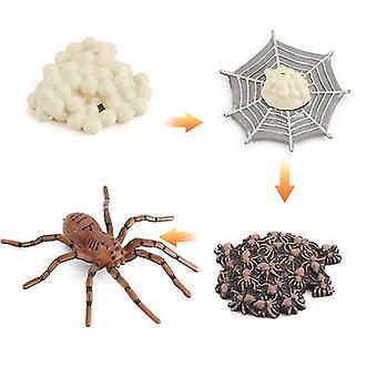 2Pcs עכביש מיניאטורי סימולציה חרקים מחזור מדע וחינוך מודל קוגניטיבי ילדים צעצועי למידה 4pcs az8889