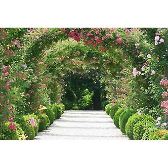 Tapete Wandbild Rose Arch Garden