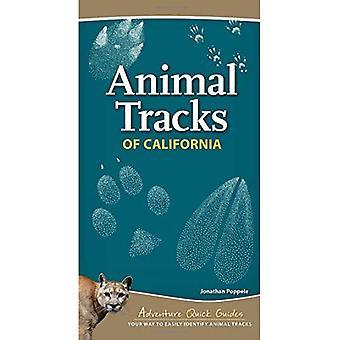 Traces d'animaux de la Californie (Adventure Guides rapides)