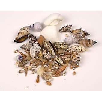50g assortiment van kleine schelpen