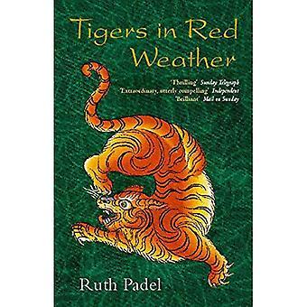 Tygrysy w czerwony Pogoda (Abacus książek)
