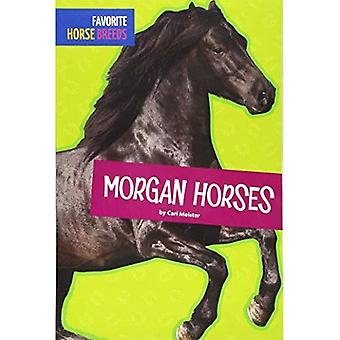 Morgan Horses (Favorite Horse Breeds)