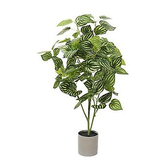 Bright Mixed Philodendron Plant 70 Cm