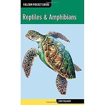 Reptiles & Amphibians (Falcon Pocket Guides)
