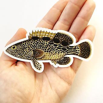 Grouper Fish Vinyl Sticker