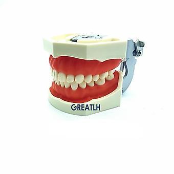 Fantómová hlava Odnímateľný model zubov