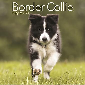 Border Collie Puppies Mini Square Wall Calendar 2021