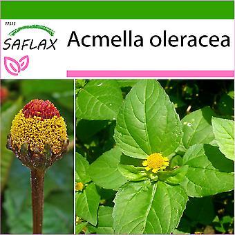 Saflax - 500 semi - con terreno - Para Cress - Brède mascia - Crescione del Brasile - Hierba de los dientes / Paracress - Parakresse