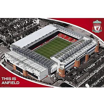 ליברפול כרזה איצטדיון