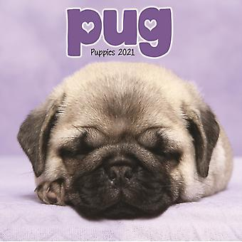 Pug Puppies Mini Square Wall Calendar 2021