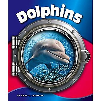 Dolphins (In the Deep Blue� Sea)