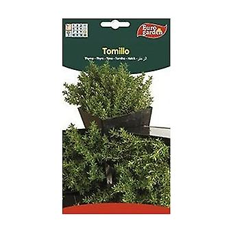 Common Thyme Seeds 75 g