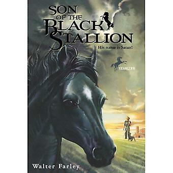 Figlio di Black Stallion