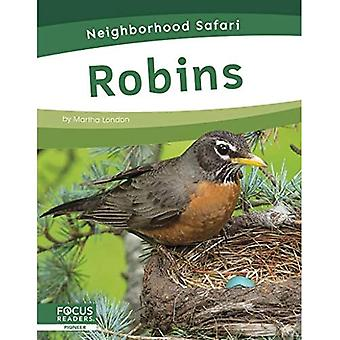 Neighborhood Safari: Robins