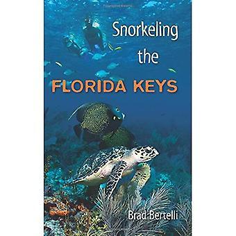 Snorkling Florida Keys
