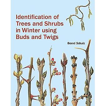 Identifikation von Bäumen und Sträuchern im Winter mit Knospen und Zweige