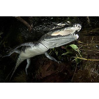 Moreleti crocodile Tulum Riviera Maya Mexico Poster Print by VWPicsStocktrek Images