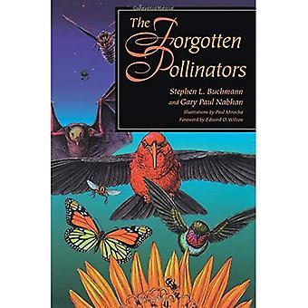 Les pollinisateurs oubliés