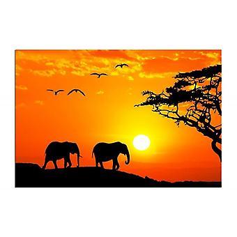 Deco Panel, Safari