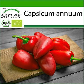 Saflax - 15 semi - Con terra - Organico - Peperoncino Caldo - Barak - BIO - Pimento - Barak - BIO - Peperoncino - Barak - Ecológico - Cile - Barak - BIO - Chili - Barak