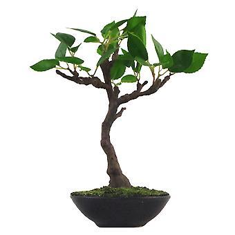 25cm Mini Ficus Bonsai en Ceramic Planter