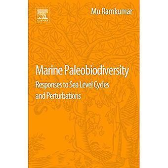 Paléobioodiversité marine : réponses aux cycles et perturbations du niveau de la mer