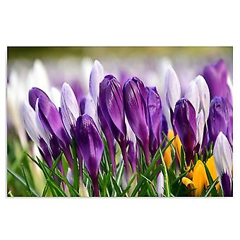 Canvas, Picture on canvas, Crocuses 5