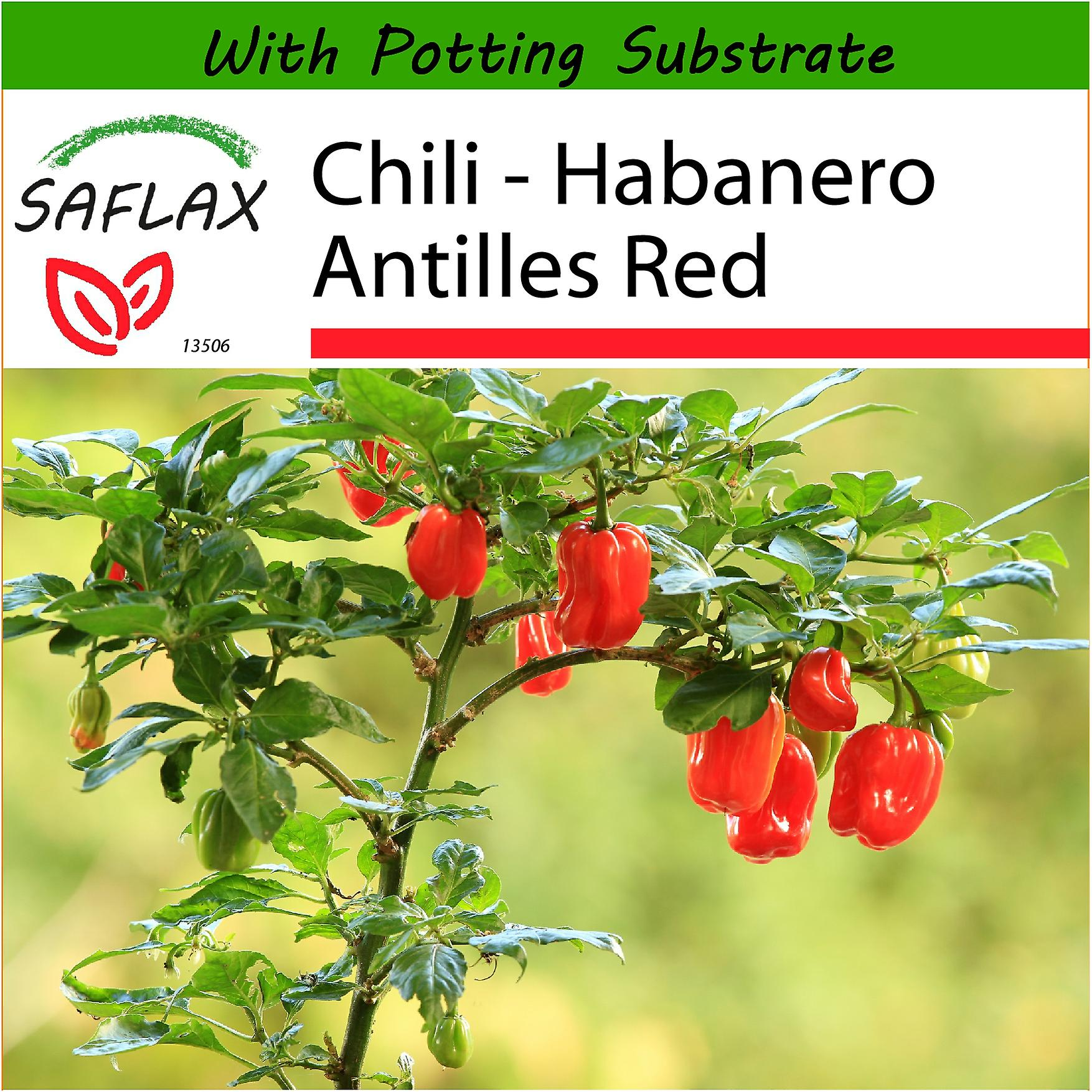 Saflax 10 Seeds With Soil Chili Habanero Antilles Red