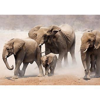 Tapet vægmaleri elephan besætning