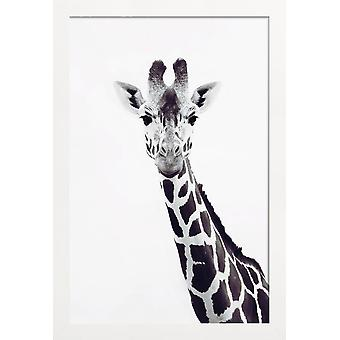 JUNIQE Print - Giraf - Giraf plakat i grå og sort