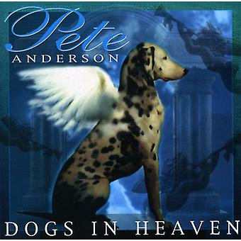 Pete Anderson - Dog's in Heaven [CD] USA import