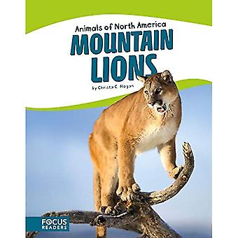 Lions des montagnes (animaux d'Amérique du Nord)