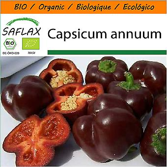 Saflax - Garden in the Bag - 10 seeds - Organic - Sweet Pepper - Sweet Chocolate - BIO - Poivron - Chocolat doux - BIO - Peperone - Sweet Chocolate - Ecológico - Pimiento - Chocolate Dulce - Paprika - Sweet Chocolate