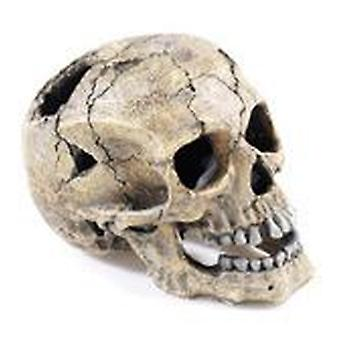 Classic For Pets Cracked Skull 205mm (Fish , Decoration , Ornaments)