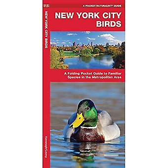 New York City Birds: An Introduction to Familiar Species in the Metropolitan Area